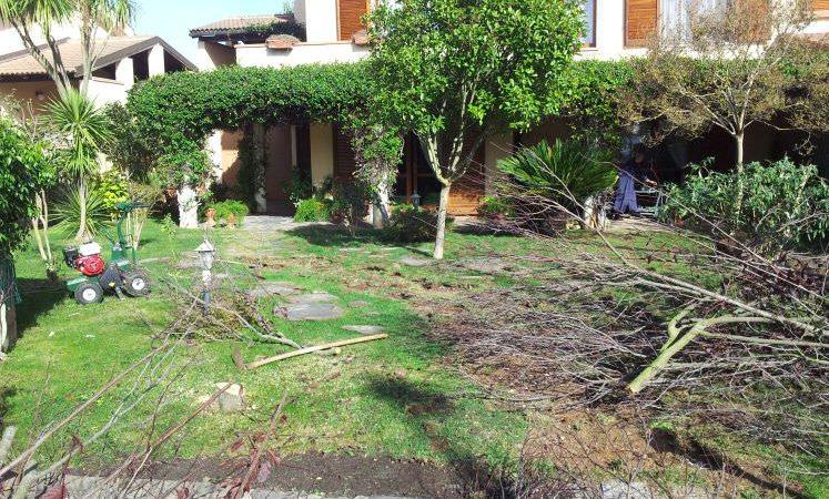 potatura alberi prima dell' installazione di un prato sintetico