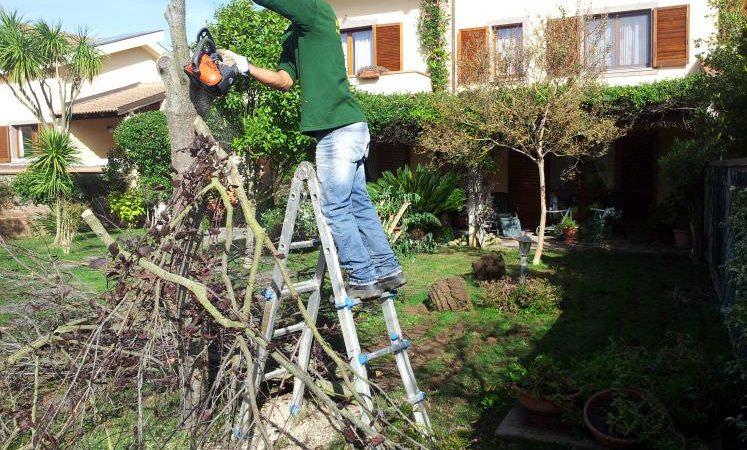 potatura alberi prima dell' installazione di un prato sintetico professionale