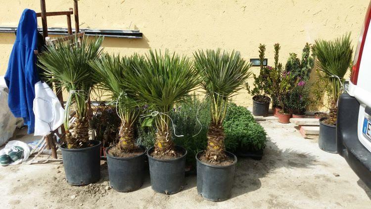 piante del giardino